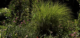 Garden_260x125